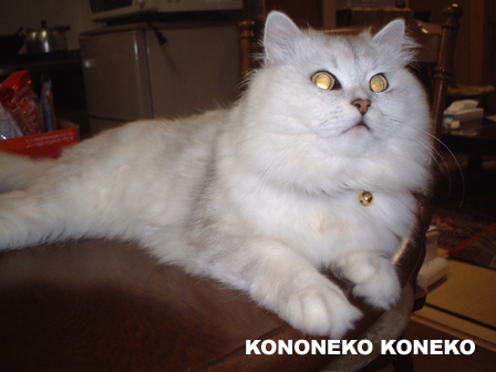 この猫仔猫-バニラ04-
