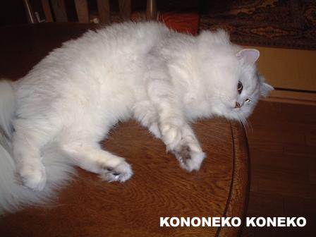 この猫仔猫-バニラ05-