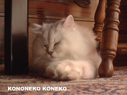 この猫仔猫-バニラ13-