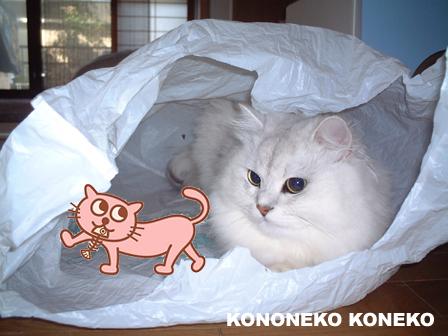 この猫仔猫-バニラ15-