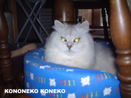 この猫仔猫-バニラ14-