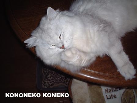 この猫仔猫-バニラ18-