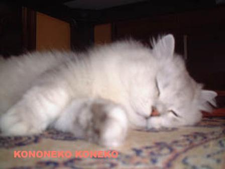 この猫仔猫-バニラ22-