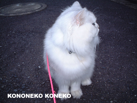 この猫仔猫-バニラ26-