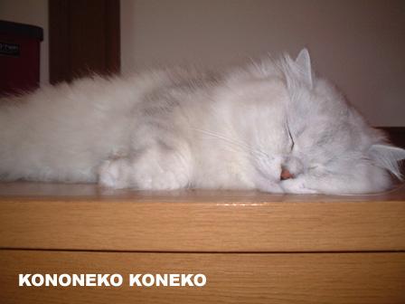 この猫仔猫-バニラ29-
