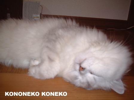 この猫仔猫-バニラ28-