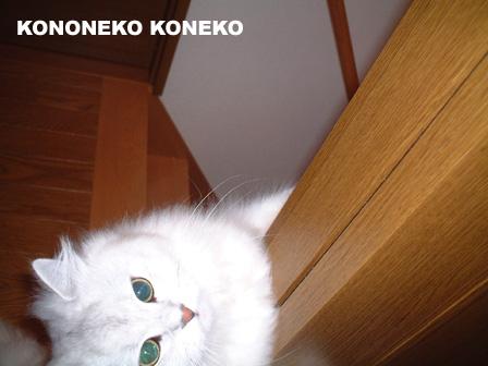 この猫仔猫-バニラ32-