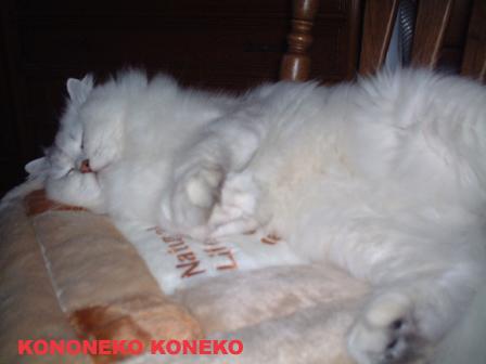 この猫仔猫-バニラ36-