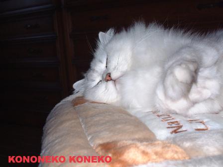 この猫仔猫-バニラ34-