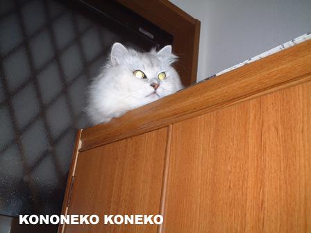 この猫仔猫-バニラ39-