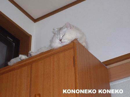 この猫仔猫-バニラ38-