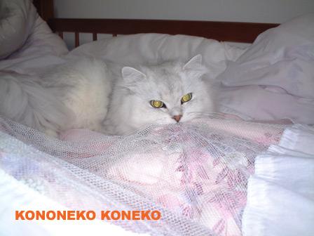 この猫仔猫-バニラ45-