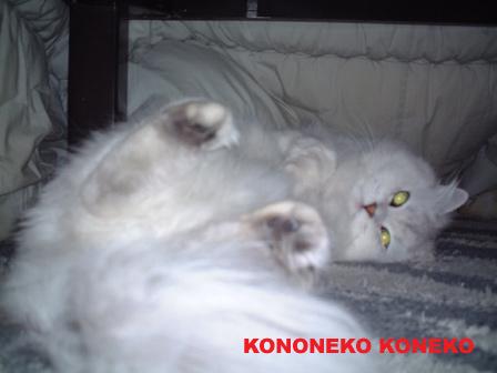 この猫仔猫-バニラ52-