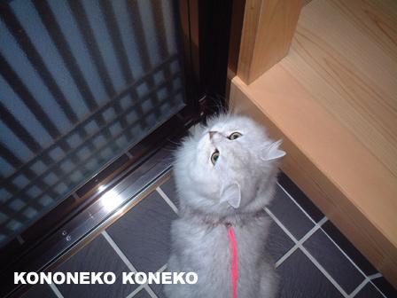 この猫仔猫-バニラ54-