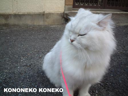 この猫仔猫-バニラ58-