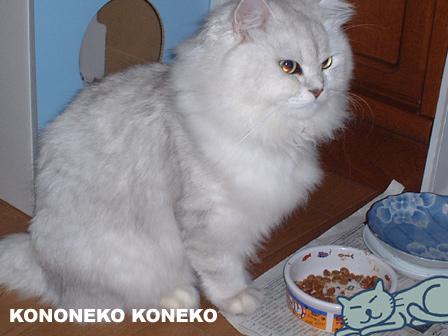 この猫仔猫-バニラ59-