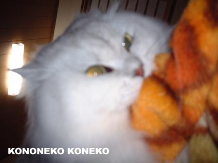 この猫仔猫-バニラ62-