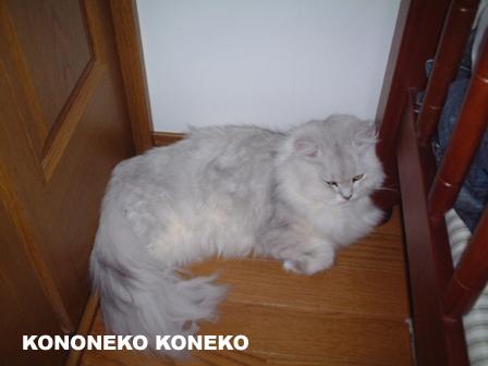 この猫仔猫-バニラ63-