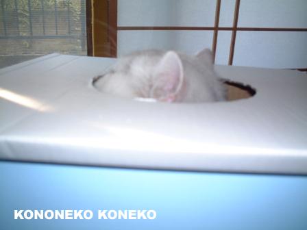 この猫仔猫-バニラ64-