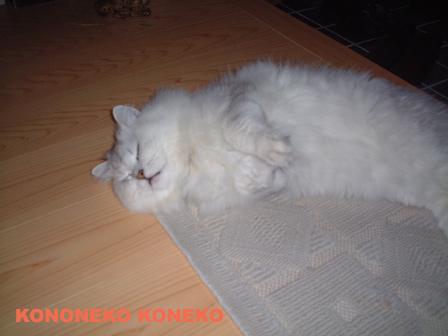 この猫仔猫-バニラ70-