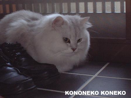 この猫仔猫-バニラ71-