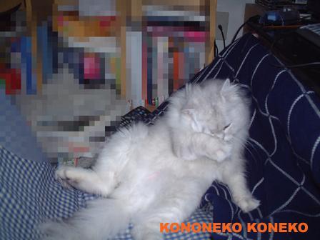この猫仔猫-バニラ73-