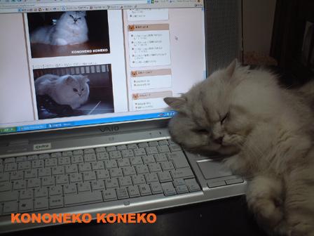 この猫仔猫-バニラ79-