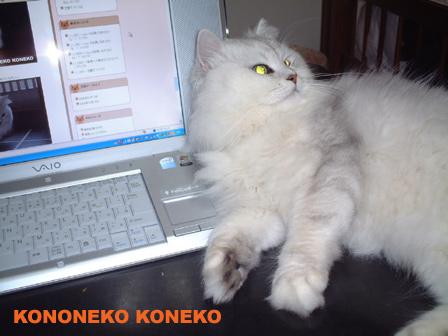 この猫仔猫-バニラ80-