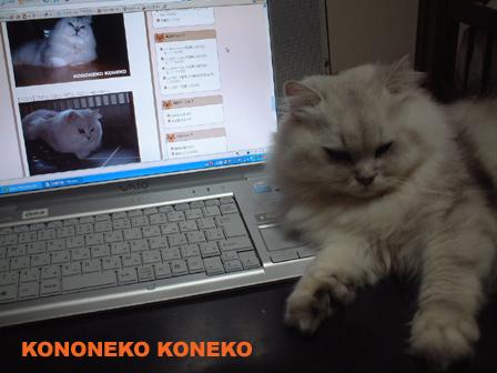 この猫仔猫-バニラ81-