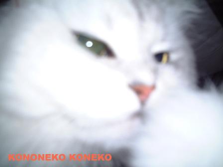 この猫仔猫-バニラ87-