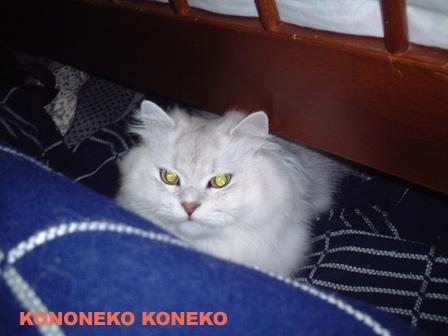 この猫仔猫-バニラ92-