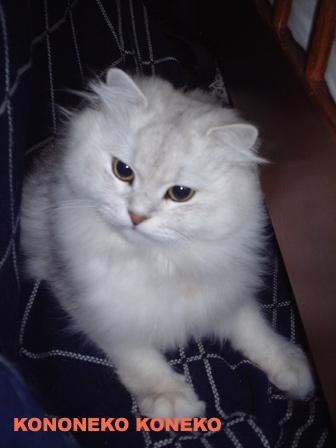 この猫仔猫-バニラ93-