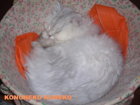 この猫仔猫-バニラ94-