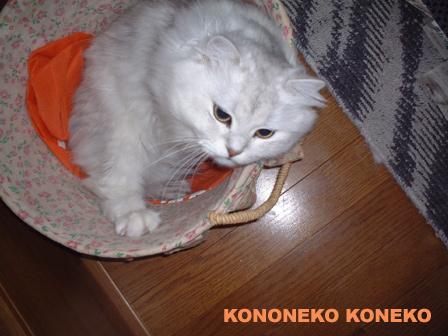 この猫仔猫-バニラ96-
