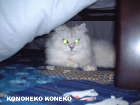 この猫仔猫-バニラ97-