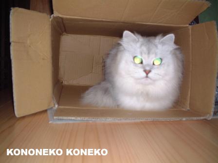 この猫仔猫-バニラ105-