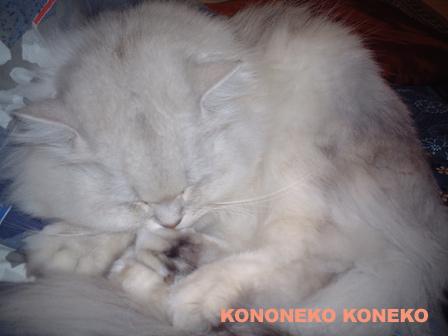 この猫仔猫-バニラ106-