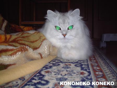 この猫仔猫-バニラ107-