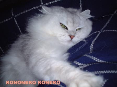 この猫仔猫-バニラ108-