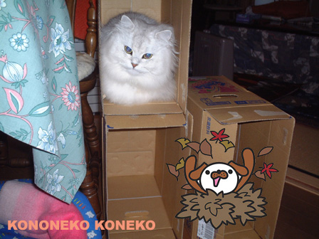 この猫仔猫-バニラ113-