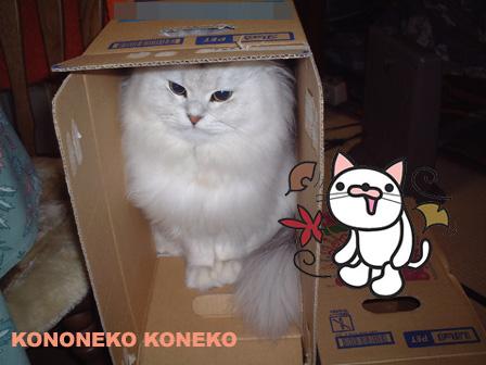 この猫仔猫-バニラ112-