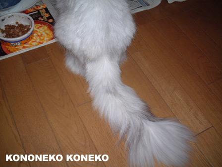 この猫仔猫-バニラ116-