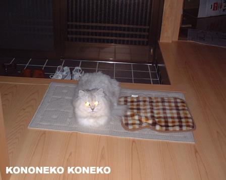 この猫仔猫-バニラ118-