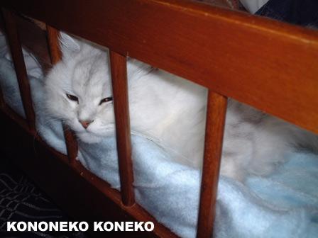この猫仔猫-バニラ121-