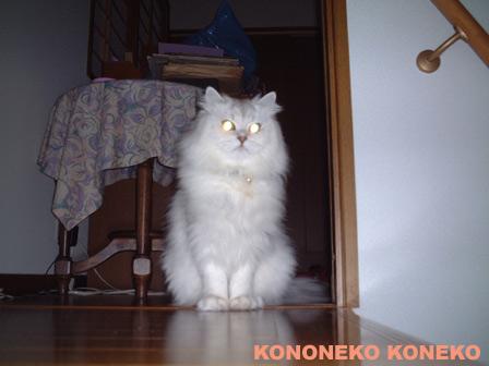この猫仔猫-バニラ123-