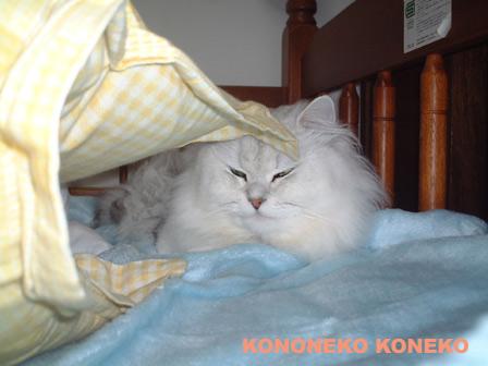 この猫仔猫-バニラ126-