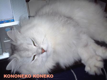 この猫仔猫-バニラ128-