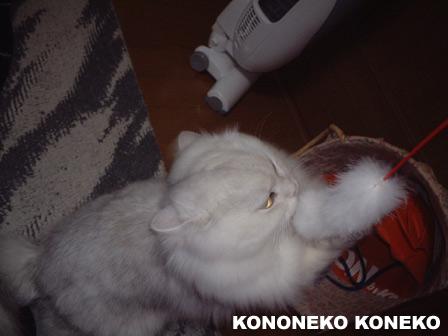 この猫仔猫-バニラ133-