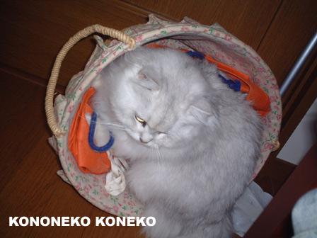 この猫仔猫-バニラ135-