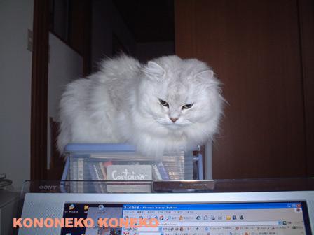 この猫仔猫-バニラ137-